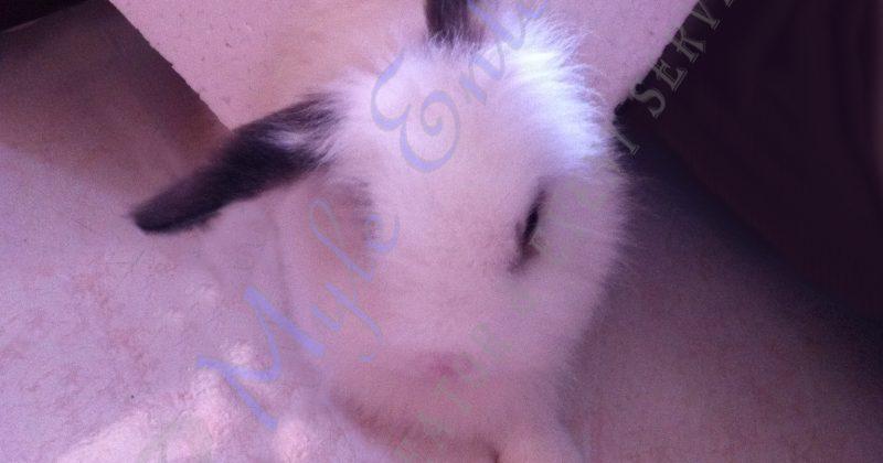 Remembering A Pet On International Rabbit Day